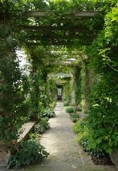 Pergola (Badly Drawn Dad) Tags: geotagged westdean westsussex unitedkingdom wisteria chichester gbr westdeangardens geo:lat=5090740210 geo:lon=077549993