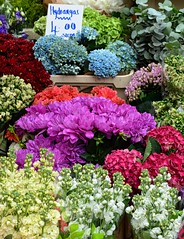Hydrangas (pjpink) Tags: flowers sale vendor portobello market portobellomarket nottinghill london england britain uk may 2016 spring pjpink colorful
