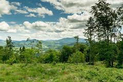 DSC_2477 (czargor) Tags: mountains landscape hill mountainside beskidy inthemountain dogtrekking beskidzywiecki