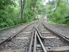 Railtracks. (Mohit S92) Tags: sgnp narrowgauge railtrack forest nationalpark mumbai india panasonic dmcfs5