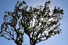 Arbre du Lac de Monteux (Jean-Paul Granier) Tags: tree sun ngc soleil