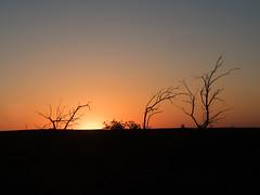 Gone Trees (ski 9) Tags: sunset deadtrees sd southdakota grasslands silhouette viviansd preshosd trees sky treessky