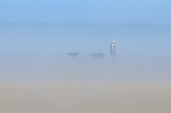 Labradors in the Mist (jonshort58) Tags: wales july2016 poppitsands cardigan beachlife mist summer seamist labrador dogwalking
