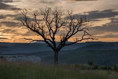 Morning Light (MrBlackSun) Tags: dusk sunrise landscape nature walnut tree curly whimsical nikon d810 france provence hautesalpes saintandre rosans saintandrderosans