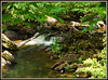 Small Waterfall - Old Stone Fort State Archaeological Park (Jerry Jaynes) Tags: manchestertnmemorialdayweekend2015 manchester tnmemorialdayweekend2015 oldstonefortstatearchaeologicalpark nikkor1685vr tripodphotography waterfall park river water tn tennessee