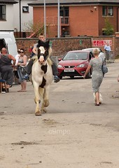 DSC_4564 (c9mpc) Tags: brigg horsefair summer traveller travellers gypsy gypsies playing play child children pony bareback riding galloping trotting romani lawless horseback hands
