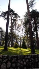 Gazing through the branches (sufferin'succotash photo) Tags: trees sun sunlight zlatibor sony alpha a3000