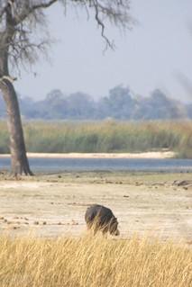 Namibia Dangerous Game Safari - Caprivi Strip 50