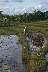Bali, nearTanah Lot, farmer (blauepics) Tags: indonesien indonesia indonesian indonesische bali island tanah lot natur landscape landschaft reisfelder rice reis fields terraces terrassen green grn agriculture landwirtschaft water wasser farmer bauer