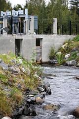 IMG_1087 (www.ilkkajukarainen.fi) Tags: fish happy kala tie koski savon sähkö vaellus suomi hirvensalmi finland stairs park ladder psss europa eu aita pato salmon trout siika tuotanto kalojen suojelu life