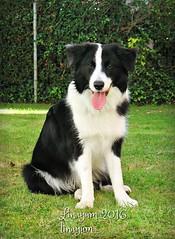 Soul  (Linayum) Tags: perro dog pet mascota bordercollie animal animals animales perros pets mascotas linayum