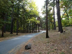 Just a walk (emmacraig1) Tags: nature fall autumn trees path