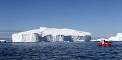A Stadium-size Iceberg in Torssukatak (twiga269  FEMEN #JeSuisCharlie) Tags: twiga269 om  whatareyoutrainingfor gettingstrongereveryday wanderlust wilderness mountainwilderness mw gngl grandnordgrandlarge gro023 iceisbeautiful 70n 70north greenland kalaallit nunaat kalaallitnunaat disko bay baiededisko diskobugten iceberg icefjord isfjord jakobshavn ilulissat qeqertaq saqqaq groenland grnland groenlandia grnland grenlandia   kayak qajaq ice hielo glace glacier immense gletscher epilobes ericchazal arctic diskoline inlandsis torssukatak kangilerngata kangilerngatasermia eqi eqip sermia smallesund
