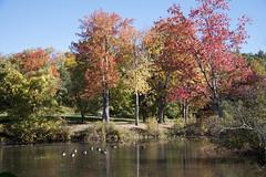 Forest Park Springfield MA  (26) (smata2) Tags: springfieldmass mass foliage forestpark