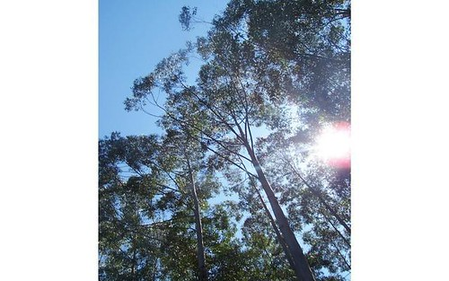 Lot 9 Candoormakh Creek Road, Nabiac NSW 2312