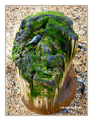Sea weed hair ( MissChief Photography ) Tags: jersey outdoor nature seaside sea st ouen ww2 minepole history seaweed