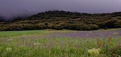 SOIREE PRINTANNIERE DANS LES MONTAGNES ESPAGNOLES (Odile ENTRE MER ET MONTAGNE) Tags: espagne losaltos landscape montagnes nuages clouds brume foret nikon d5500 fleurs