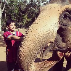 ชอบทุกอย่างของทริปเลี้ยงช้าง แม่มูนตัวใหญ่มากกกกกก เทียบขนาดตัวเรากับงวง  แต่ก็ใจดีมากให้เราขี่หลังทั้งวัน :) #มีรูปสวยๆอีกเยอะเลยอะ