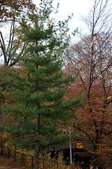 IMG_6540 (ShellyS) Tags: nyc newyorkcity fall centralpark manhattan parks foliage