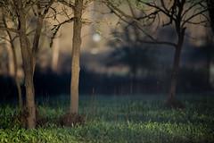 ___ (Randy Wentzel Photography) Tags: nikon nikkor f4 6000 sonomacountycalifornia d4s wentzelphotocom nikond4s january2014 randywentzelphotograpy