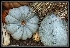 Grey Pumpkin (I) (gtncats) Tags: nature gourds pumpkin outdoors grey explore hay greypumpkin canon70d photographyforrecreation infinitexposure