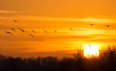 Sunrise (genf) Tags: trees light sun birds silhouette sunrise sony vogels tele zon zonsopgang a77 ouderkerk abcoude botshol rondehoep