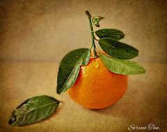 Letting go. (Through Serena's Lens) Tags: life art photo still citrus clementine textured magicunicornverybest
