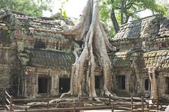Ta Prohm Temple (adiaphane) Tags: travel cambodia southeastasia angkorwat unesco temples siemreap taprohm wats worldheritage