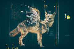 ParisDog (Mikes Right Eye) Tags: paris france window stuffed wings wolf display surreal panoramas sigma des taxidermy passage passagedespanoramas dp2m