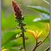 Mexican Flora - Tlapa Mexico