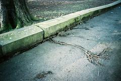 0084_31 (www.cjo.info) Tags: plant tree film 35mm scotland flora edinburgh kodak unitedkingdom pavement roots rangefinder olympus analogue newtown citycenter londonroad olympusxa kodakportra160 compactrangefinder geocity exif:make=fujiphotofilmcoltd camera:make=fujiphotofilmcoltd geostate geocountrys camera:model=sp3000 exif:model=sp3000 geo:lat=55957941666667 geo:lon=31781666666667
