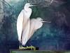 IMG_2466 a bird's dream (pinktigger) Tags: italy white bird texture nature couple italia dream egret friuli fagagna oasideiquadris feagne oasidequadris