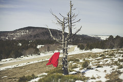 Red (Capelle.R) Tags: winter red portrait mountain snow france cold tree nature canon season 50mm photographer flag hiver neige arbre cevennes 5dm2 capeller