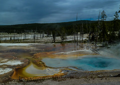 Yellowstone-Nationalpark - USA (Kat-i) Tags: trees usa nature water wasser natur unesco yellowstonenationalpark wyoming kati bäume hotsprings katharina weltnaturerbe geothermalenquellen