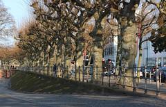 Mainkai, Frankfurt am Main 2015 (Spiegelneuronen) Tags: main frankfurtammain allee mainkai plantanen