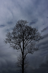 All alone (dm4n) Tags: singapore queenstown tree overcast dark dead foreboding deciduous cloudy leafless bare shape shadow branch