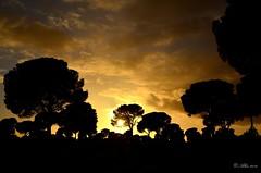DESPUES DE LA TORMENTA... (Alberto Fer.) Tags: color colores tormenta atardecer anochecer pinar pino pinos nubes amarillo nikon 5100 enero 2014 invierno cielo nube airelibrecastillayleon airelibre puestadesol sol puesta castillaylen