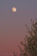Moon rise through olive grove (Nikos Roditakis) Tags: moon nikon olive s nikos af nikkor rise vr groves episkopi 5520mm d5200 pediados roditakis