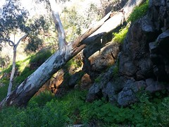 20160716_145006 (StephenMitchell) Tags: adelaidegreenhills nature organic trees gully valley hill mountain blackwood belair edenhills southaustralia trek walk creek rock stone