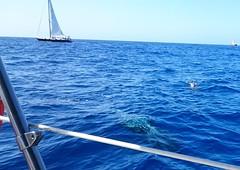 DSC_3459 (daeljan) Tags: blue sea tenerife whale adeje