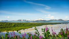 (onestopphotography) Tags: alaska landscape nature green flower mountain blue