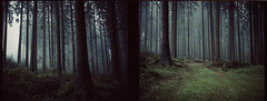 calm woods (. ) Tags: mamiya7ii 80mm kodak portra 400vc expiredfilm mediumformat 6x7 woods mist fog rain calm filmisnotdead filmshooter analogue analog karlstift