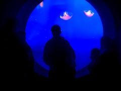 Jellyfish (analebron007) Tags: water jellyfish blue