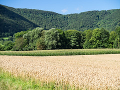 Lindach valley near Neidlingen (schauplatz) Tags: neidlingen schwäbischealb wanderung landschaft landscape summer sommer swabianalb forest wald field weizenfeld hills hügel