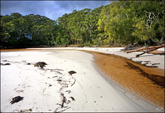 Booderee (katepedley) Tags: greenpatch beach booderee national park australia jervis bay newsouthwales nsw new south wales shoalhaven creek tanin gum trees eucalyptus canon 5d 1740mm polariser sand white