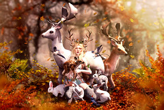 Fauna (meriluu17) Tags: deer fawn faun fauna forest leaves autumn animal animals pet pets bunny rabbit swallow bambi outdoor light warm fantasy magic magical surreal people foliage plant