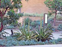UTC 9-23-16 (12) (Photo Nut 2011) Tags: universitytowncenter universitycity sandiego california utc macys