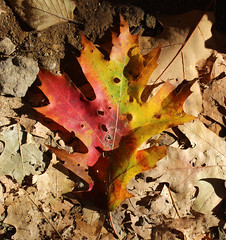 Fall Shadow by Karie Anderson (AccessDNR) Tags: 2016 photocontest fall autumn scenery sceniclandscape princegeorgescounty foliage leaves