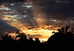 Sun Shine (Dreaming of the Sea) Tags: nikon d7200 dusk trees twilight bamboo clouds sky sunset tamron palmtrees tamronsp2470mmf28divcusd topf25 bluesky 2016 october sun summer 500v20f 1500v60f