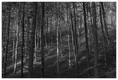 My monochromatic forests